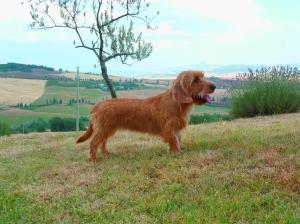 amelie-tuscany-1_small