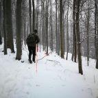 im Laufschritt durch den Wald