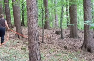 Flott und sicher durch den Wald