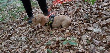 Claire der Minifährtenhund